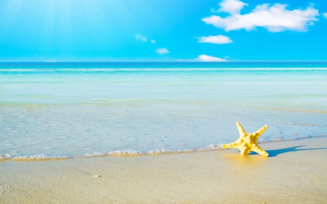 Starfish-Summer-Wallpaper